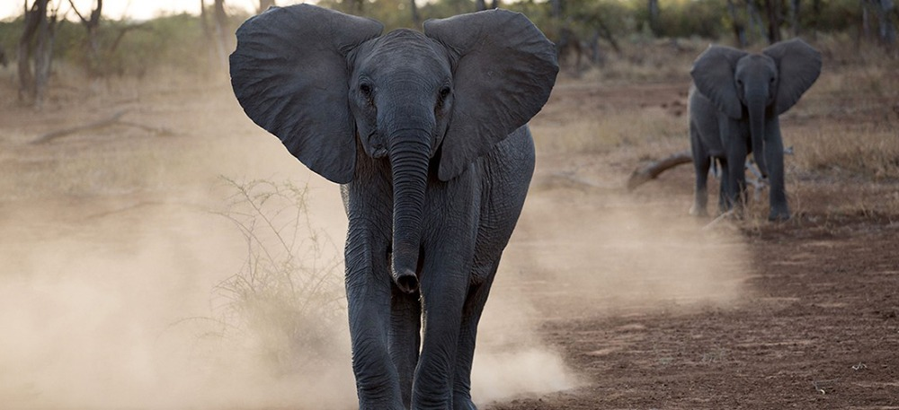 De Beers Group to Move 200 Elephants from South Africa to Mozambique in Major Conservation Effort